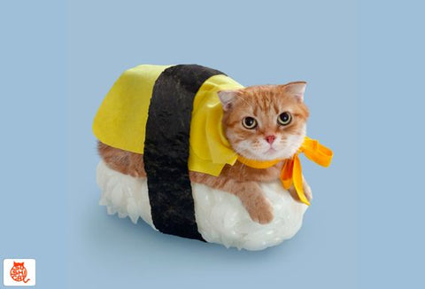 sushi cat food fun