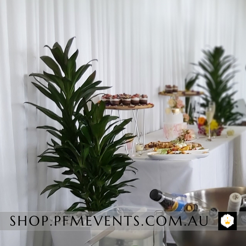 Guaca Plant Hire Launch Event Melbourne Weddings