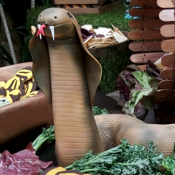 Giant Snake Cake Launch Event Melbourne Weddings