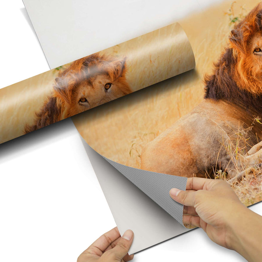 Dekorfolie Lion King - Do-it-yourself - creatisto