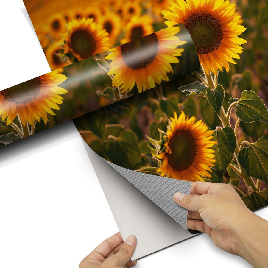 Dekorfolie Sunflowers - Do-it-yourself - creatisto