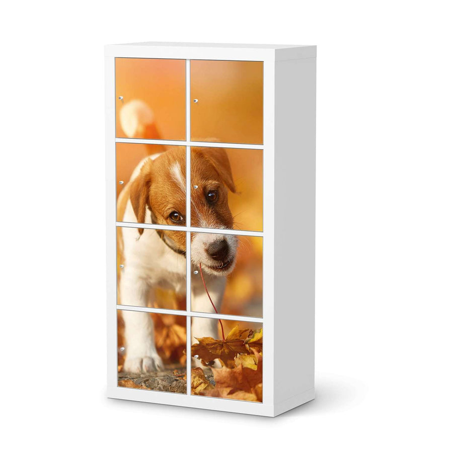 Klebefolie Jack the Puppy - IKEA Expedit Regal 8 Türen  - weiss