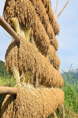 Heirloom Rice - Long Grain 1.54 lb drying process