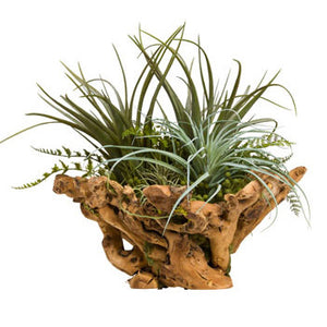 Faux Air Plant in Exotic Wood Bowl