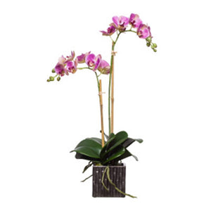 Variegated Silk Double Phalaenopsis in Square Pot – Purple & White