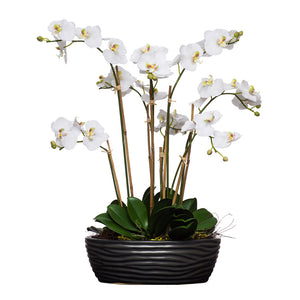 White Silk Phalaenopsis in Ridged Black Bowl