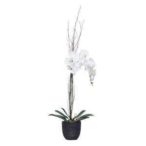 Tall White Silk Phalaenopsis in Black Malta Pot