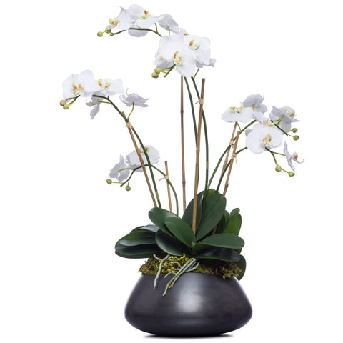 Tall White Silk Phalaenopsis in Black Bowl