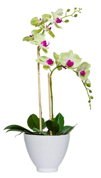 Tall Silk Single Stem Orchid Plant - White & Purple