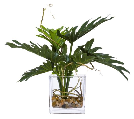 Faux Split Philo Leaves & Selloum Arrangement