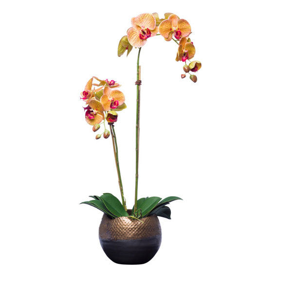 Orange Silk Phalaenops Orchid in Bronze Pot