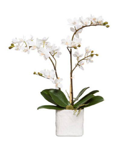 Silk Double Stem Orchid Plant - White