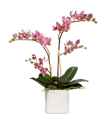 Silk Double Stem Orchid Plant - Pink