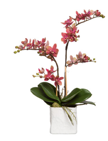 Silk Double Stem Orchid Plant - Dark Pink