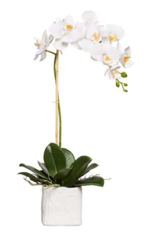 Silk Single Stem Orchid Plant - White