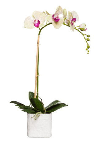 Silk Single Stem Orchid Plant - Pale Green & Pink