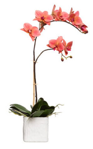 Silk Single Stem Orchid Plant - Coral