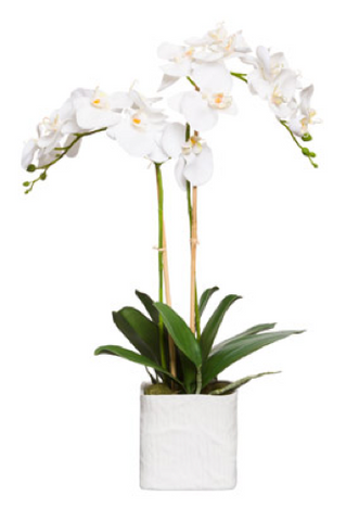 Large Silk Double Stem Orchid Plant - White