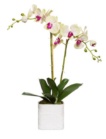 Large Silk Double Stem Orchid Plant - Pale Green & Pink