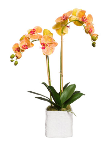 Large Silk Double Stem Orchid Plant - Orange & Pink
