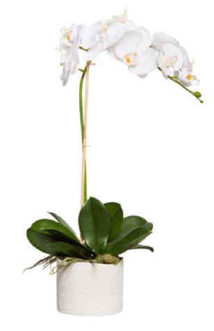 Large Silk Single Stem Orchid Plant - White