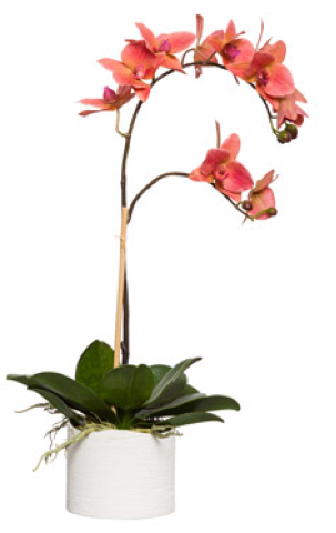 Large Silk Single Stem Orchid Plant - Coral
