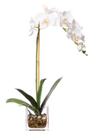 Silk Single Orchid in Water-Like Container - White
