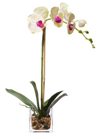 Silk Single Orchid in Water-Like Container - Pale Green & Pink