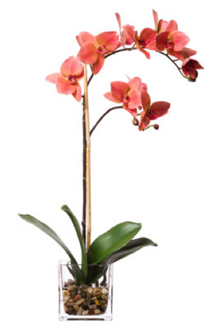 Silk Single Orchid in Water-Like Container - Coral