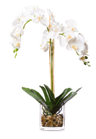 Silk Double Orchid in Water-Like Container - White
