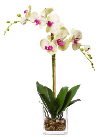 Silk Double Orchid in Water-Like Container - Pale Green & Pink