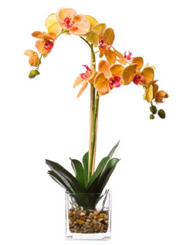 Silk Double Orchid in Water-Like Container - Orange & Pink