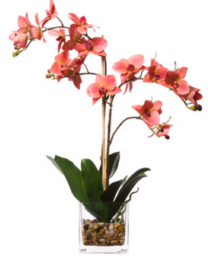 Silk Double Orchid in Water-Like Container - Coral