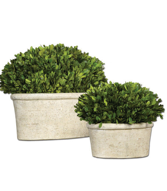 Faux Florals - Boxwood In Oval Planters - Set Of 2