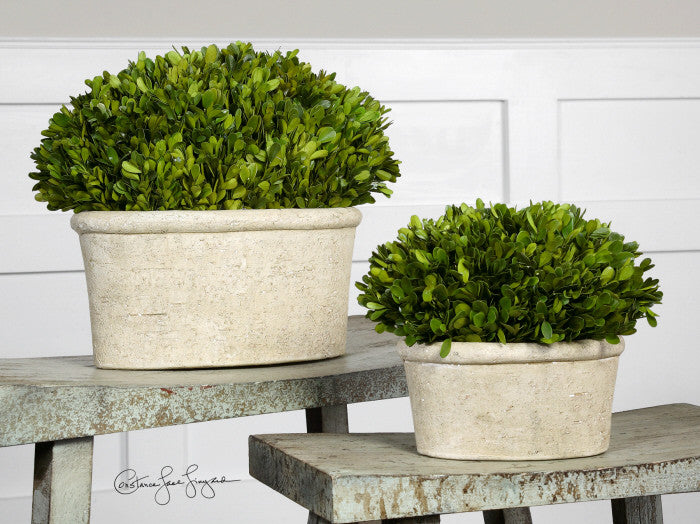 Preserved Boxwood in Oval Planters   Set of 2