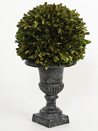 Faux Florals - Boxwood Silk Topiary In Black Urn