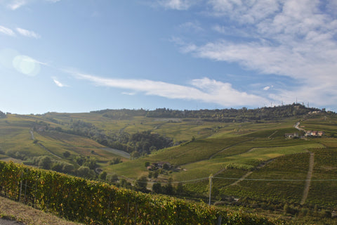 The rolling hills of Piedmont's Langhe Region