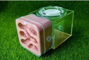 Plaster Ant Nest Acrylic Ant Farm Ants Queen House Insect Cage Anthills Pet Ant House Granja De