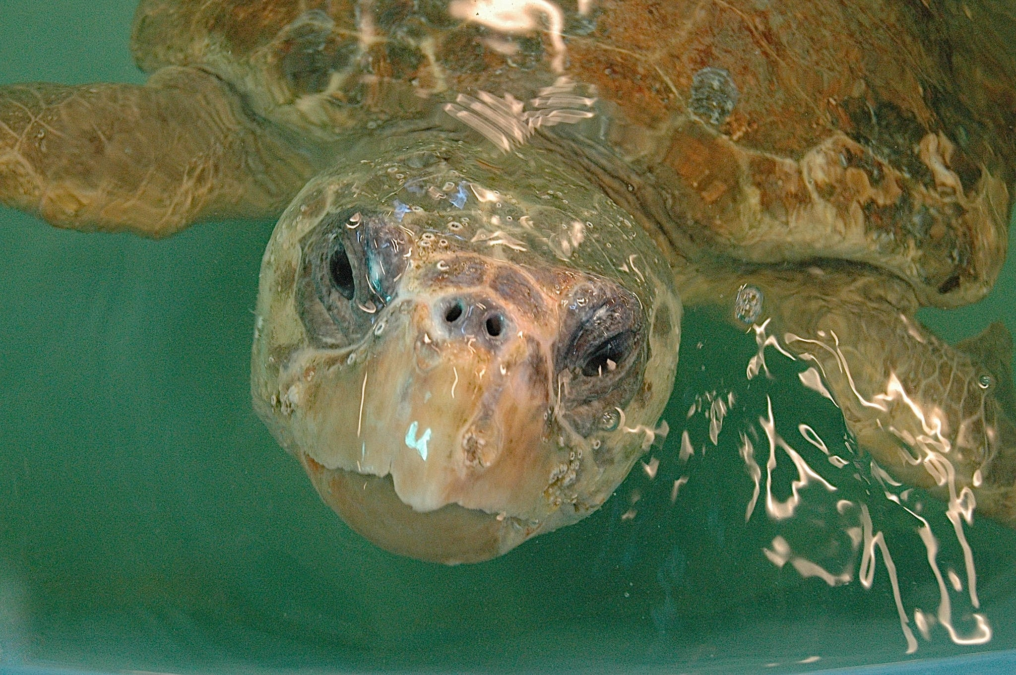 Georgia Sea Turtle Center Membership Program