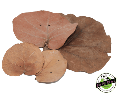 Sea Grape Leaves Substrate for sale online at cheap prices. ABG mix is important for vivariums and reptile enclosures.