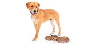 What Should I Do If My Dog Is Bitten By A Snake?