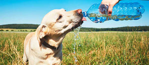 What To Do When A Dog Has Heatstroke