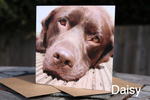 Dog photo on greeting cards blank for your message
