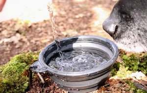 Water bottle holder & collapsible water bowl