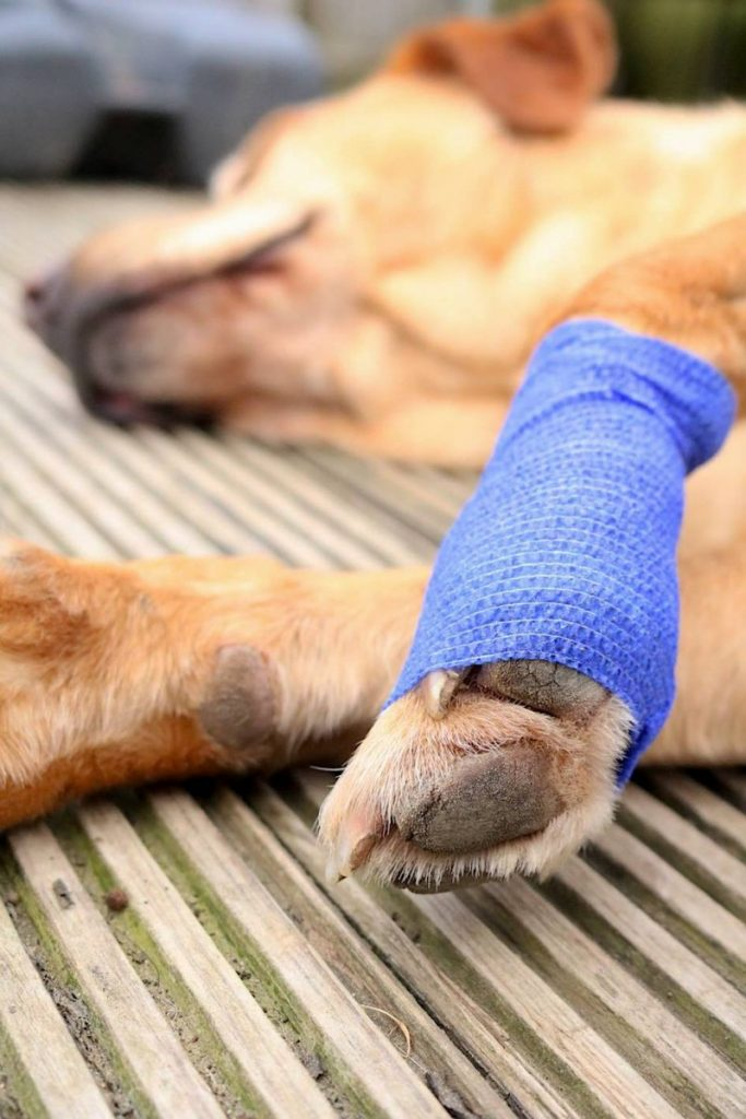 bandages for dogs