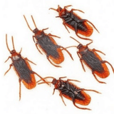 Cockroaches (20 pack)