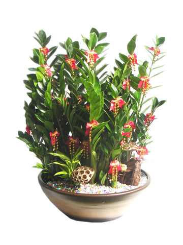 Indoor Plants for your home - ZZ Plant - Zamioculcas Zamiifolia