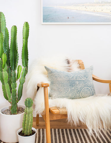 Indoor Plants that are good for your home - Carribbean Tree Cactus
