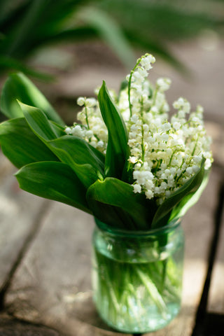 Lily of the Valley May Birthday Flower
