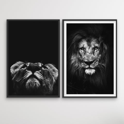 Lion and Lionness wall art prints